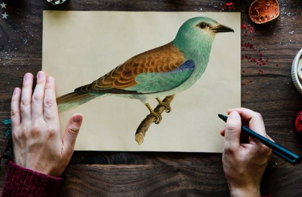 Pexels stock photo - photo of a person drawing a green and brown bird.